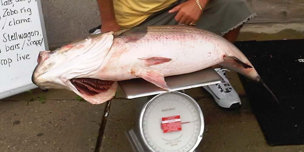 Fishing Finatics - Santini Tube Lure